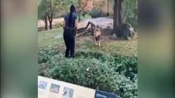 Mỹ: Người phụ nữ vượt rào bảo vệ, nhảy nhót trêu ngươi trước mặt sư tử