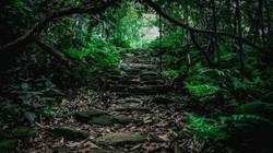 Cần bảo tồn Vườn quốc gia Tam Đảo đi đôi với phát triển