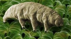 """Tìm ra bí quyết của loài vật sống dai đến mức """"không làm thế nào cho chết đi được"""""""