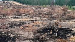 """Vụ """"tàn sát"""" 140ha rừng: Chủ tịch tỉnh yêu cầu tạm dừng dự án"""