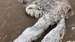 Xác thủy quái bí ẩn dạt vào bờ biển Anh khiến người dân hoang mang