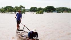 An Giang: Lũ mênh mông, nước tràn đồng, rắn ri voi bán 400 ngàn/ký