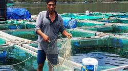 Khánh Hòa: Nhiều nông dân lâm cảnh trắng tay bởi tôm, cá chết