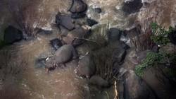 Thái Lan: Cứu voi non, 6 voi trưởng thành chết thảm ở thác tử thần
