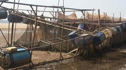 """Phú Thọ: Sông Đà """"tụt nước"""" đột ngột, dân nuôi cá lồng mất tiền tỷ"""