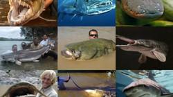 """10 loài """"quái vật"""" nước ngọt nguy hiểm nhất trên thế giới"""