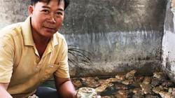 Khánh Hòa: Nuôi ếch ộp ở chuồng heo cũ kiếm gần 20 triệu/tháng