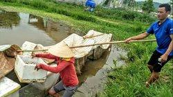 Nghệ An: Đọc báo Nông thôn ngày nay tìm ngay ra thứ ốc làm giàu