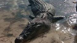 Philippines: Cá sấu khổng lồ đục thủng thuyền, kéo người xuống nước ăn thịt