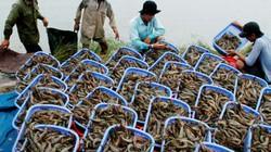 Sáng 11/10: Diễn đàn Nông dân quốc gia lần IV - Cùng nông dân đi chợ thế giới