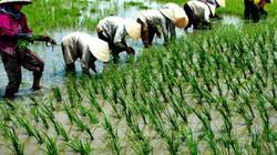 """Liên kết để cùng đưa nông sản Việt Nam tiến mạnh ra """"chợ"""" thế giới"""