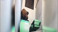 Nga: Nhét thuốc nổ vào máy ATM, chết thảm sau tiếng nổ to đến hãi hùng