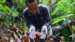 """Quảng Nam: Loài nấm được xem là """"thần dược"""" trồng ở đâu?"""
