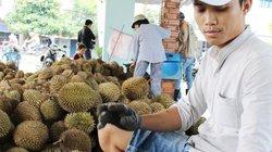 """Bao giờ sầu riêng Việt hết """"lót đường"""" sầu riêng Thái?"""