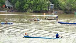 Đồng Tháp: Mùa cá ra sông, dân bắt vài chục ký cá linh, cá lăn/ngày