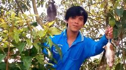 Đồng nước nổi An Giang: Tắm đồng, bắt chuột cây, hái cà na kỳ thú