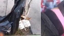Băng đảng nguy hiểm nhất Mexico thảm sát hàng loạt người thân băng đối thủ