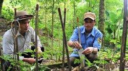 """Quảng Nam: Kỳ công bảo tồn """"quốc bảo"""" sâm Ngọc Linh trên đỉnh mây mù"""