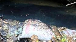 Kinh hoàng hình ảnh nước đen ngòm dầu mỡ ở NM nước sạch sông Đà