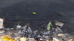 """Nước có """"mùi lạ"""", TGĐ Công ty nước sạch Sông Đà lý giải thế nào?"""