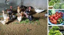 'Nông trại' trên sân thượng trồng rau xanh, nuôi gà sạch của mẹ đảm Quảng Ninh