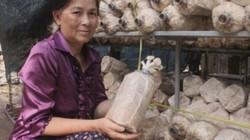 """""""Vua nấm"""" Bảy Yết: Người đầu tiên trồng nấm bào ngư ở Việt Nam"""