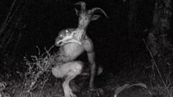 Những sinh vật bí ẩn đáng sợ bậc nhất trên thế giới