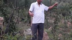 Thái Nguyên: Mang thứ cây ra củ quý trồng trên đồi, bán đắt hàng