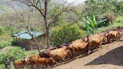 Điểm sáng trong quá trình thực hiện mục tiêu giảm nghèo bền vững