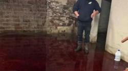 Xuống hầm lấy máy khoan, rợn người phát hiện cảnh kinh hoàng dưới nền hầm