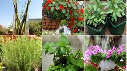 Top 7 loại cây là 'khắc tinh' của kiến ba khoang nên trồng trong nhà