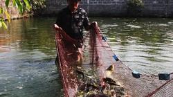 """Trên vùng đất cát và """"khát"""" vẫn nuôi được 10 tấn cá lóc, cá rô"""