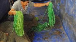 Tỉnh nào cũng có lươn, nhưng bất ngờ là vẫn phải nhập khẩu
