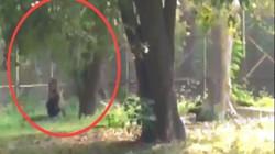"""Video: Nhảy vào vườn thú, ngồi rồi nằm ra trước mặt sư tử như """"mời xơi"""" và diễn biến sau đó"""