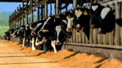 Doanh nghiệp sữa Việt đầu tiên chinh phục thị trường 60 tỷ USD