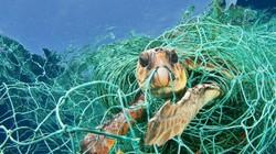 Rùa biển đang đứng trước nguy cơ bị đe dọa tuyệt chủng