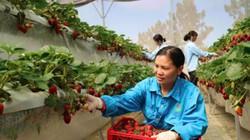 Xây dựng nông thôn mới ở Lâm Đồng: Ưu tiên ứng dụng công nghệ 4.0