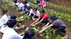 Nghệ An: Vựa rau xanh, sạch cho học sinh bán trú vùng biên