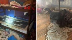"""Mỹ: Đột nhập ngôi nhà, phát hiện 3 đứa trẻ và 245 vật nuôi trong điều kiện """"thảm"""" chưa từng thấy"""