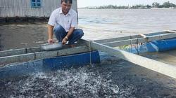 An Giang: Nuôi dày đặc cá đuôi đỏ như son, bắt 100 tấn, lời tiền tỷ