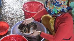 Đồng Tháp: Giữa mùa nước nổi ra chợ tìm mỏi mắt mới có mớ cá đồng