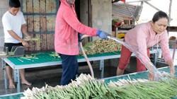 Chủ tịch Hội NDVN: Hỗ trợ nông dân làm thương hiệu nông sản