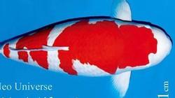 """Mua cá sống đắt nhất thế giới với giá """"siêu to khổng lồ"""" 42 tỷ đồng"""