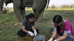 Thứ quý như vàng trong phân voi, muốn mua cũng khó, giá 25 triệu đồng/kg
