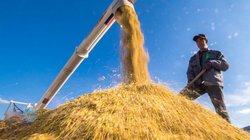 Công nghệ sẽ giúp nông hộ nhỏ thích ứng tốt với biến đổi khí hậu