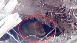 """Úc: Nô đùa trên bờ sông, rợn người phát hiện """"tử thần"""" nấp ở hố đất ngay cạnh"""