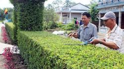 Sức sống mới ở huyện thuần nông Vị Thuỷ