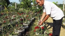 Làm giàu nhờ đưa hoa hồng miền Bắc vào trồng ở miền Nam