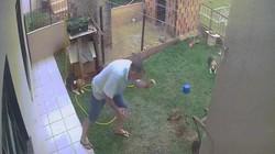 Vợ nhờ diệt gián, người đàn ông làm cho cả khu vườn nổ tung