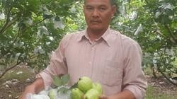 Thầy giáo Thái Bình kiếm 20 triệu mỗi tháng nhờ ổi lê Đài Loan